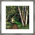 Sechelt Marsh Path Framed Print