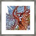 Sedona Arizona Ghost Tree Framed Print