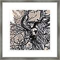 Sedona Arizona Ghost Tree In Black And White Framed Print