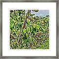 Seeds Framed Print