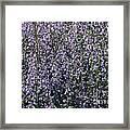 Seeing Lavender Framed Print