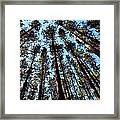 Seeing The Forest Through The Trees Framed Print