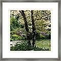 Serene Garden Retreat Framed Print