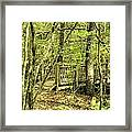 Shades Mountain Bridge In The Forest Framed Print