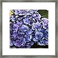 Shades Of Blue Framed Print by Tanya Jacobson-Smith
