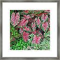 Shades Of Pink And Green And A Hint Of Purple Framed Print