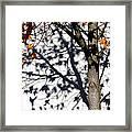 Shadows Of Fall Framed Print