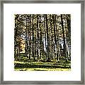 Shadows Of The Larch Forest Sunset No2 Framed Print