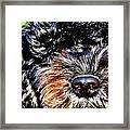 Shaggy Black Dog Framed Print