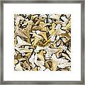 Sharks Teeth Framed Print