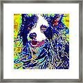Sheep Dog 20130125v1 Framed Print