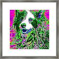 Sheep Dog 20130125v2 Framed Print by Wingsdomain Art and Photography