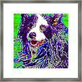 Sheep Dog 20130125v4 Framed Print
