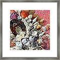 Shell Creation  13 Framed Print