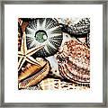 Shellscape Framed Print