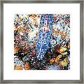 Shrimp 32 Framed Print