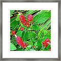 Shrimp Bloom Framed Print