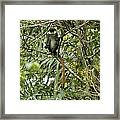 Silly Red-tailed Monkey Framed Print
