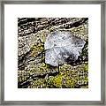 Silver Leaf Framed Print