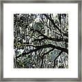 Silver Savannah Tree Framed Print