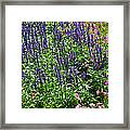 Simple Beauty - Purple And Pink Framed Print