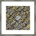 Simply Moss Framed Print