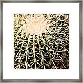 Single Cactus Ball Framed Print