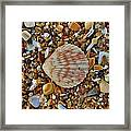 Single Shell Hatteras Island 17 9/3 Framed Print