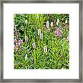 Sitka Burnet And Tall Fireweed In Katmai National Preserve-ak Framed Print