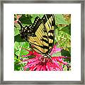 Sitting On Dinner Framed Print