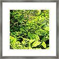 Skunk Cabbage Thicket Framed Print