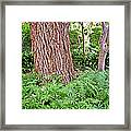 Slippery Elm And Ferns Framed Print