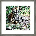 Smiling Jaguar Framed Print