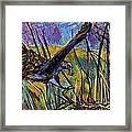 Snail Kite Framed Print