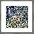 Snake With Legs Framed Print