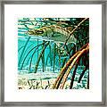 Snook In The Mangroves Framed Print