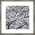Snow Branches 2-1-15 Framed Print