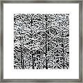 Snow Branches Framed Print