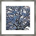 Snow Bright Framed Print
