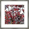 Snow Capped Berries Framed Print