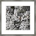 Snow Covered Pine Tree Framed Print