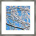 Snow Covered Tree Limb Framed Print