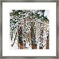 Snow Covered Trees Framed Print