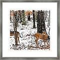 Snow Doe's 1 Framed Print