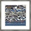 Snow Geese Framed Print