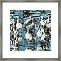 Snow Geese Discussion Framed Print
