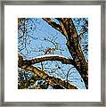 Snow In Oak Framed Print