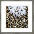 Snow On Top Of Small Saguaro Cactus Framed Print