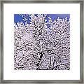 Snow On Tree Framed Print