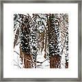 Snow On Tress 2 Framed Print